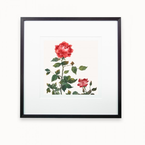 Le Jardin des Roses | mira Black