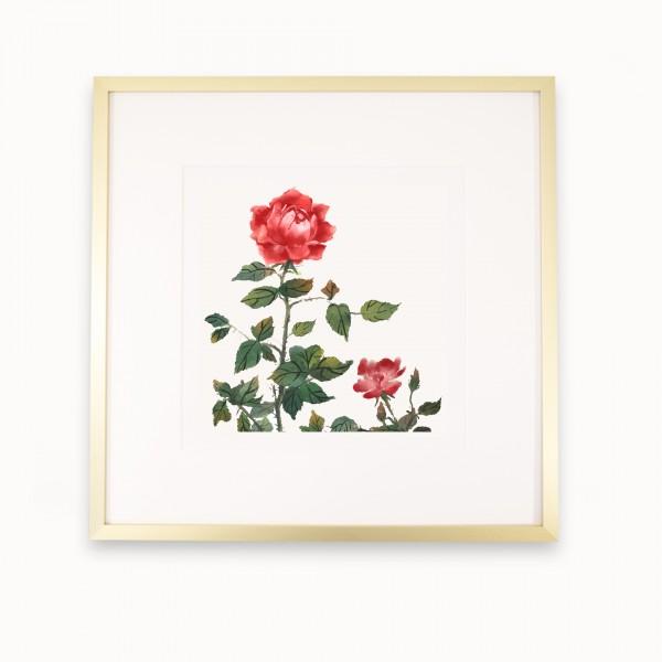 Le Jardin des Roses | mira Gold