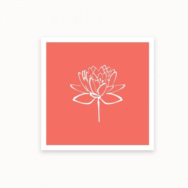 Lotus II | Bittersweet | mirandolo basics